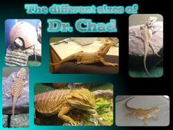Dr. Chad: size difference
