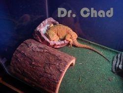 Dr. Chad Sleeping