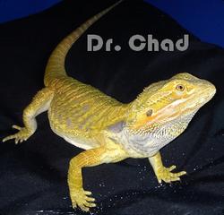 Dr. Chad Contest Photo