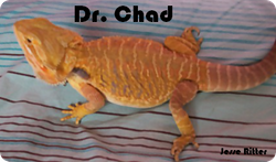 Dr. Chad: On a pillow