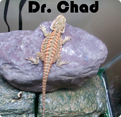 Dr. Chad: Amazing Coloring