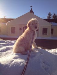 Butter's favorite place - on top of a snowbank