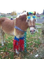 Alex in his clown costume