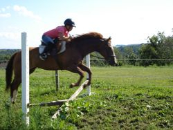 Jenna jumping Chance - what a great pair!