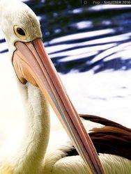 :: Backlighting on Pelican ::