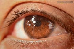 :: Her Brown Eyes ::