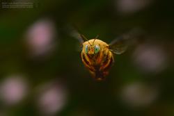 :: Bubble-Bee ::