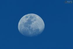 :: Blue Moon ::