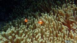 :: Hiding Nemo ::