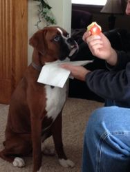 I'll share my puppy chow with you if you share that apple with me...