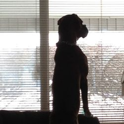 Watching my master leave without me!