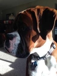 The boxer profile.