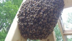 construction swarm 1