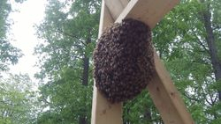 Construction swarm 2