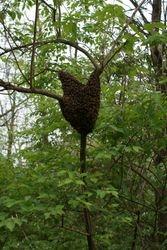cool swarm