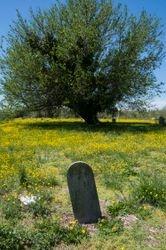 DiBari_Michael_Spring_Elmerton_Cemetery_Hampton