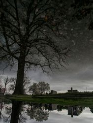 DiBari_Michael_Starry_Night_Forest_Lawn_Norfolk
