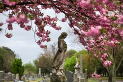 DiBari_Sherry_Spring_Forest_Lawn_Norfolk