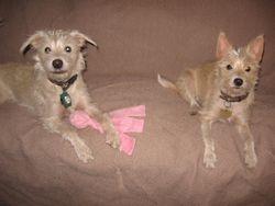 Sammy & Sadie