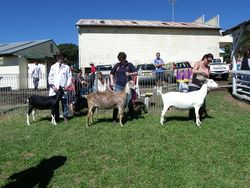 GrandCh line up Kempsey Show 2012