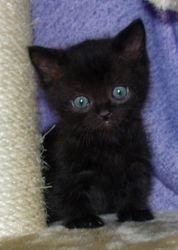 Chanel's Black plush-coat little boy-Angus