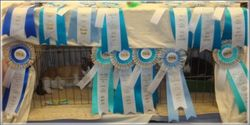"""Ribbons from """"Booker's"""" last show!"""