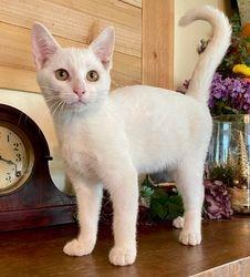Quinn's White gold-eyed girl
