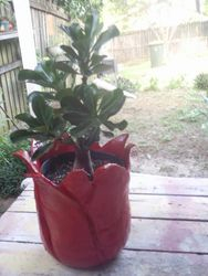 My Red Pot