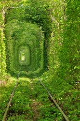 One of the most beautiful train tunnels in the world.