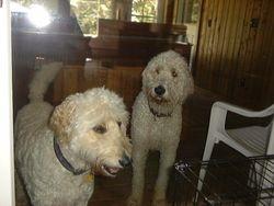 Dixie & Jasper