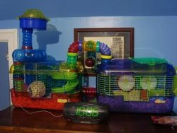 Mac & Tosh's Hamster Heaven
