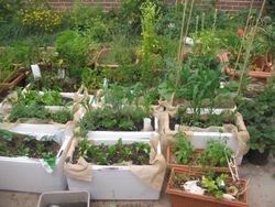 wicking gardens I did last year