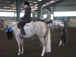 Youth Hunt Seat Equitation