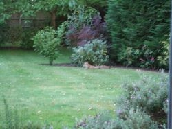 Real garden visitor