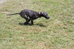 Running outside in the sprinkler.  17 weeks.