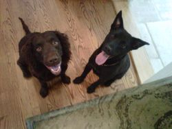 Oliver ( right) and cousin Duffy ( left) may 2011