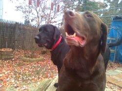 Griz and Kodiak hanging out