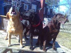 Bear,Kodiak & Grizzly