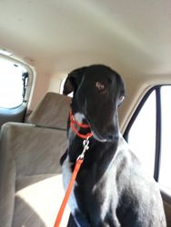 Jack on his way home