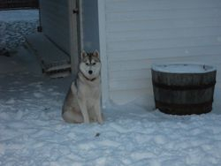 Kazsa loves the snow!!!