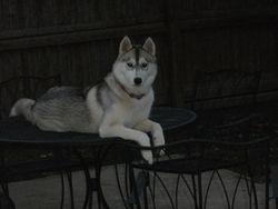 Kazsa again on top of the table