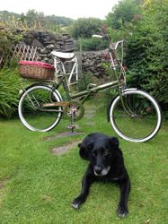New tyres, new bell, old dog
