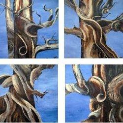 Bristlecone Pines (set of 4)
