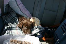 Cache on his way to his new home.