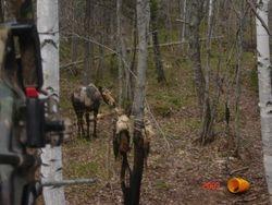 moose 09