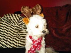Spanky the Reindeer2