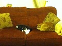 Sushi and Treacle taking a nap!