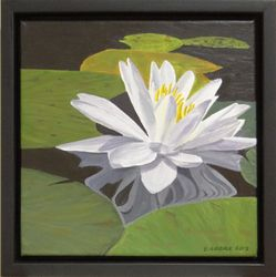 Waterlily and Reflection