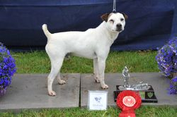 Class 21 Veteran terrier (terrier must be 7 years old or over)