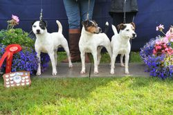 Class 24 Progeny (Sire or Dam -  son or daughter ? grandson or granddaughter) Entries must consist of  3 different terriers